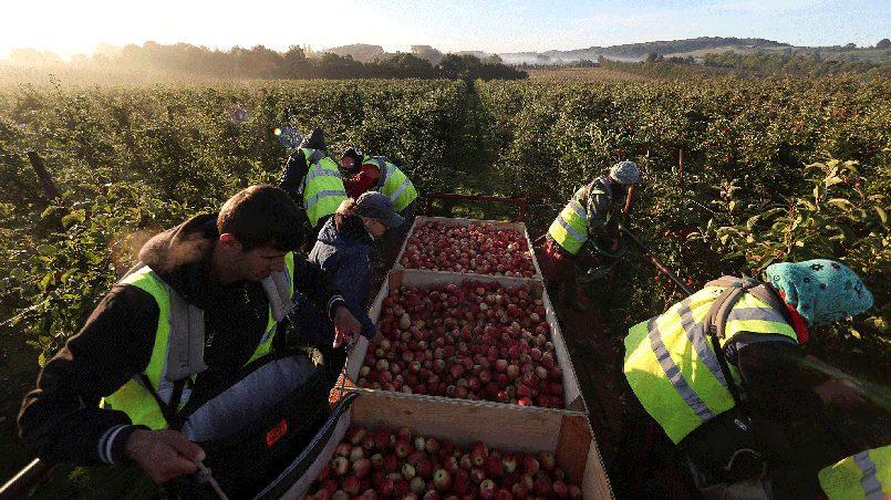 Иммигранты из Восточной Европы на сельскохозяйственных работах в Великобритании. Фото: independent.co.uk
