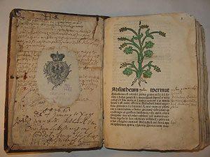 Рецепт вечной жизни из старинной инкунабулы