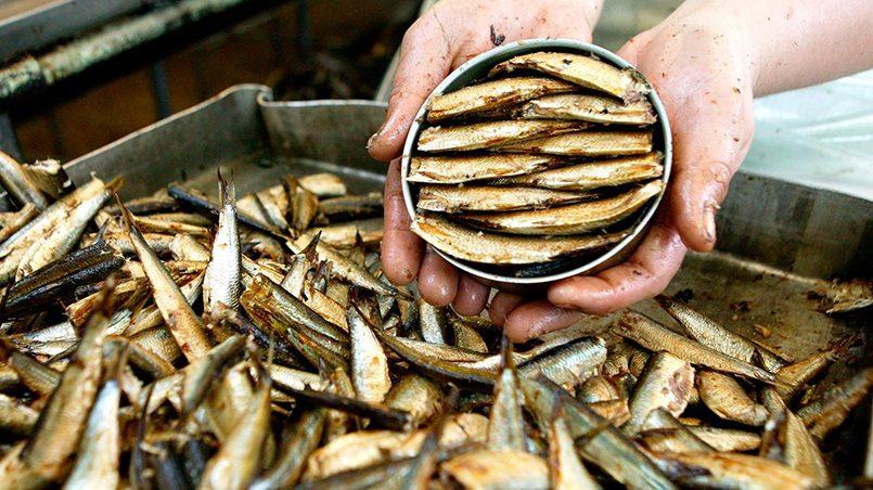 Россельхознадзор снял ограничения на ввоз шпрот с двух рыбоконсервных заводов Латвии и Эстонии