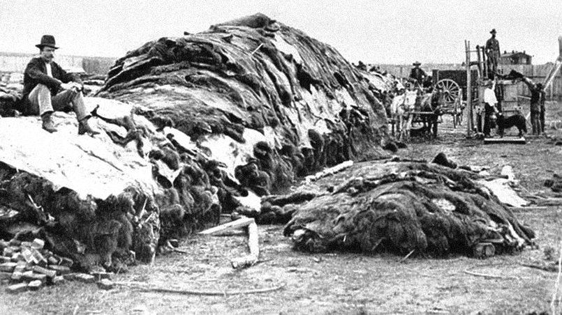 Уничтожение бизонов в США / Фото: /politikus.ru
