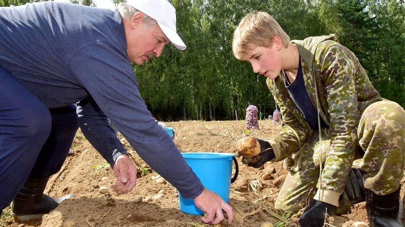 Лукашенко с сыном собирают урожай картошки / фото: president.gov.by