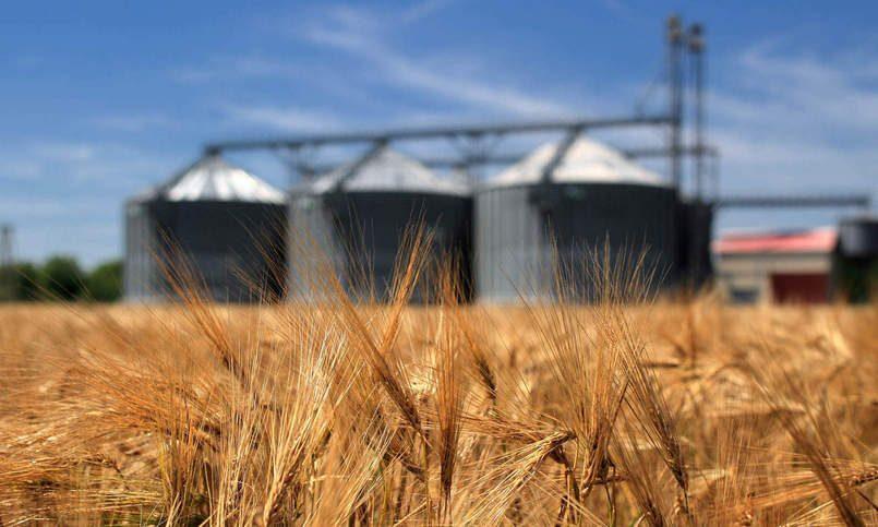 Украина за5 дней выбрала квоты наэкспорт зерна вЕС