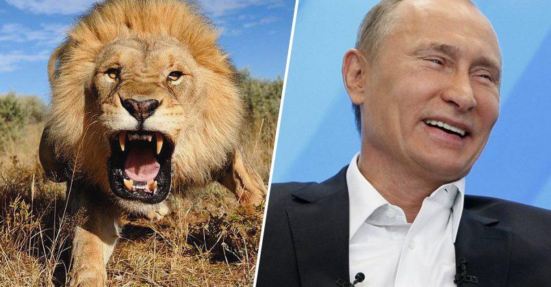 Путин выпустил львов на улицы, чтобы граждане соблюдали карантин: новый фейк про Россию